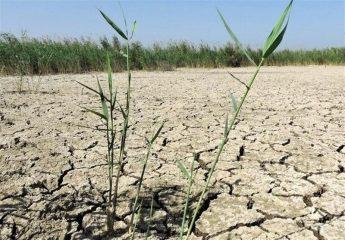 احیای ۲۸۰ هکتار از زمینهای زراعی رامهرمز با مشارکت بنیاد برکت